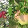 Krst knihy Rok v ovocnej záhrade