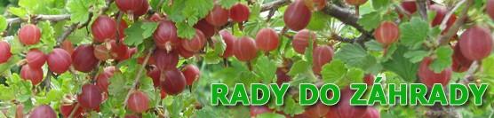 Plánujeme pestovanie zeleniny v záhradke