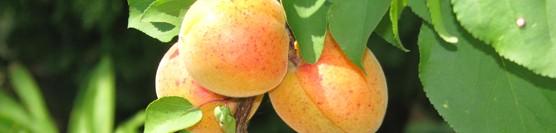 Predstavujeme: Rok v ovocnej záhrade