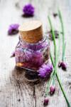liečivé byliny rastliny