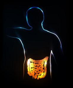 Human body- bowels